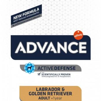 Advance Golden Retriever